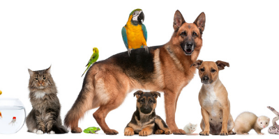 The need for Pet Friendly rentals in Cairns